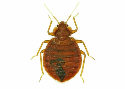 Bed Bug Pest Control Vancouver WA