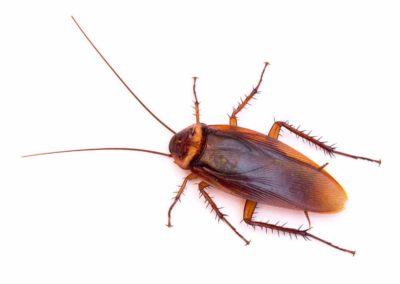 Cockroach Pest Control Vancouver WA