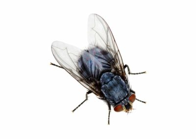 House Fly Pest Control Vancouver WA