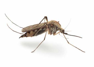 Mosquito Pest Control Vancouver WA