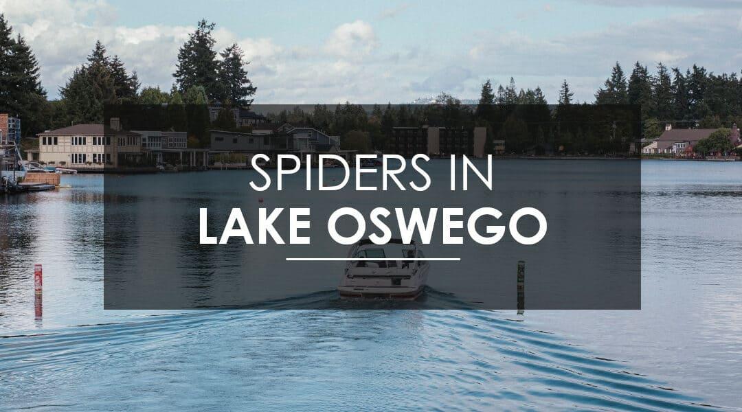 Spider control Lake Oswego