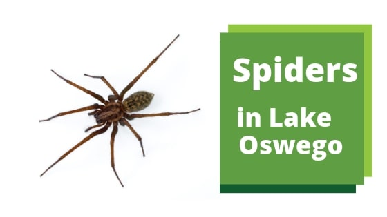 Spiders in Lake Oswego