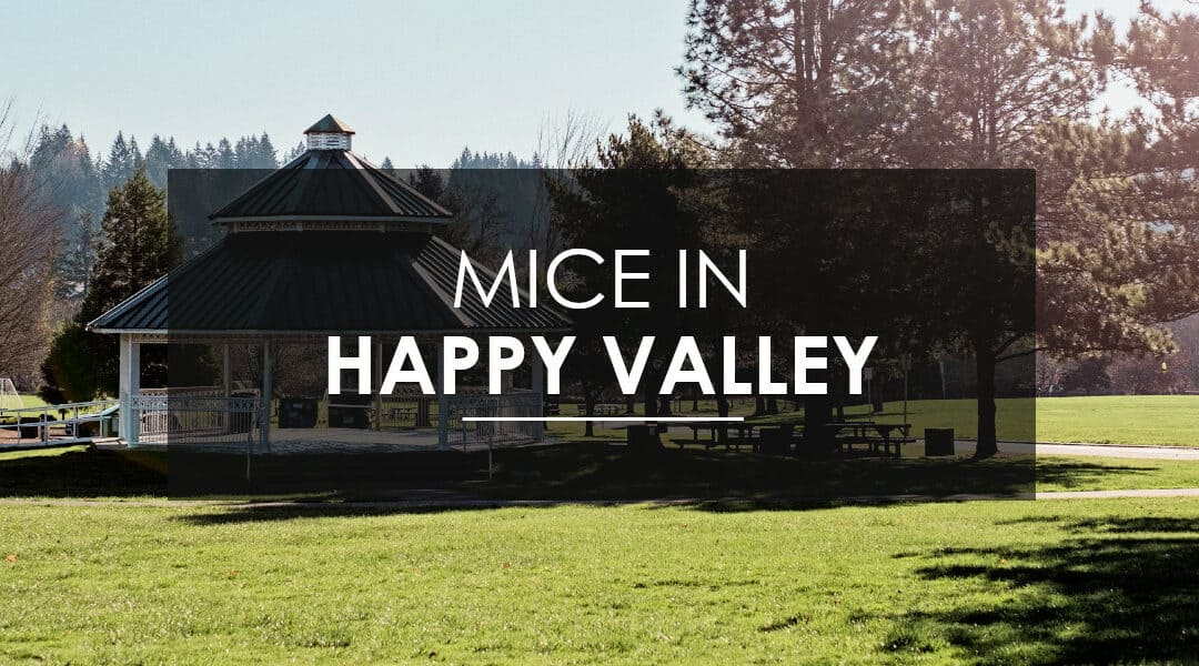 Mice Extermination in Happy Valley