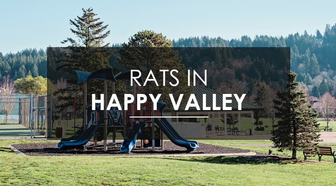 Rat Extermination in Happy Valley