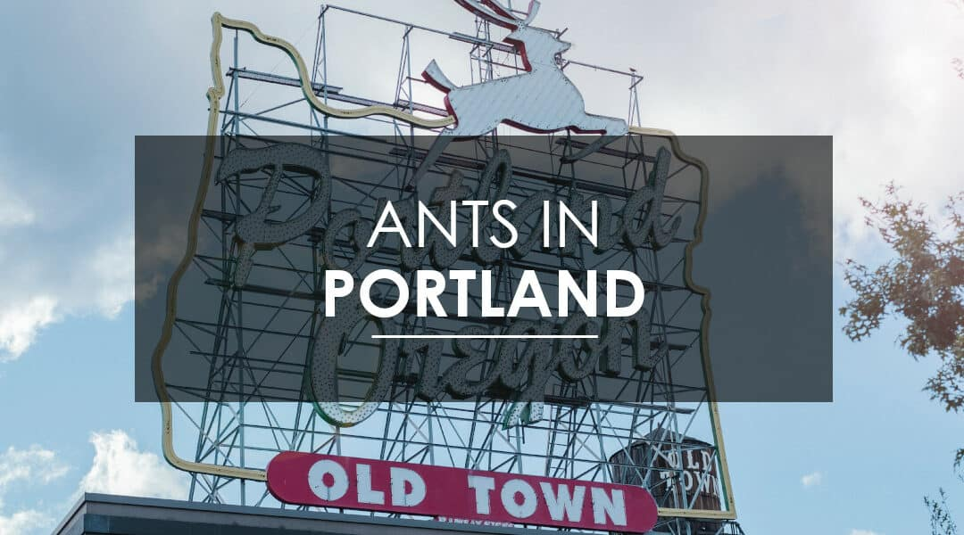 Ant Extermination in Portland