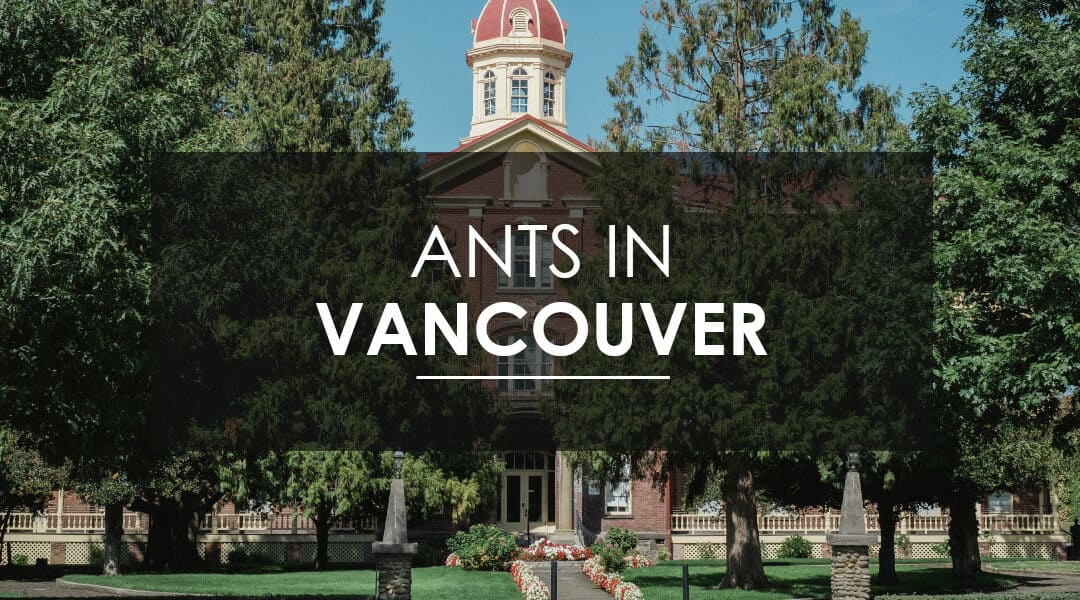 Sugar Ant Extermination in Vancouver
