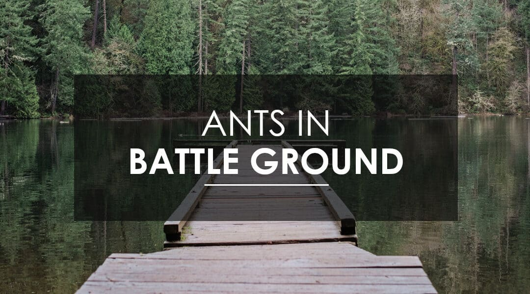 Ant Control in Battle Ground