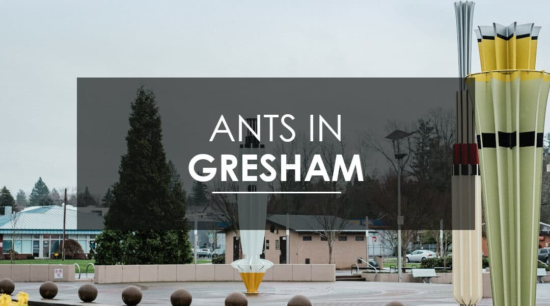 Ant control in Gresham, OR.