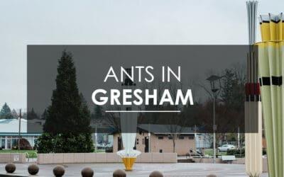 Ant Control in Gresham