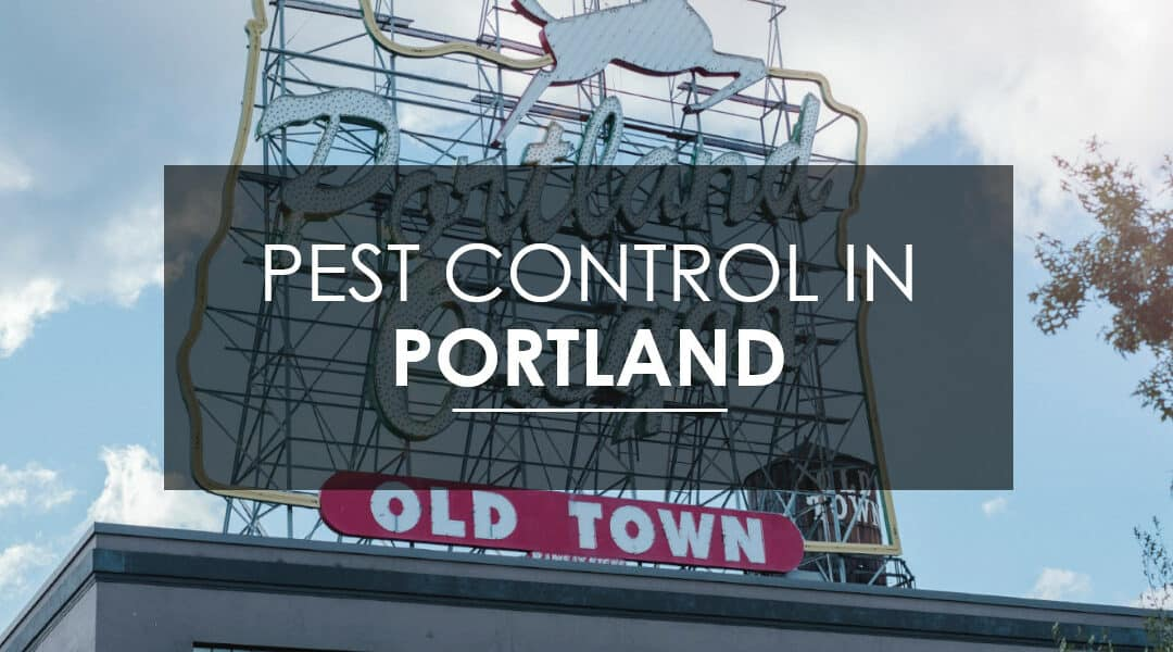 Pest Control in Portland, OR