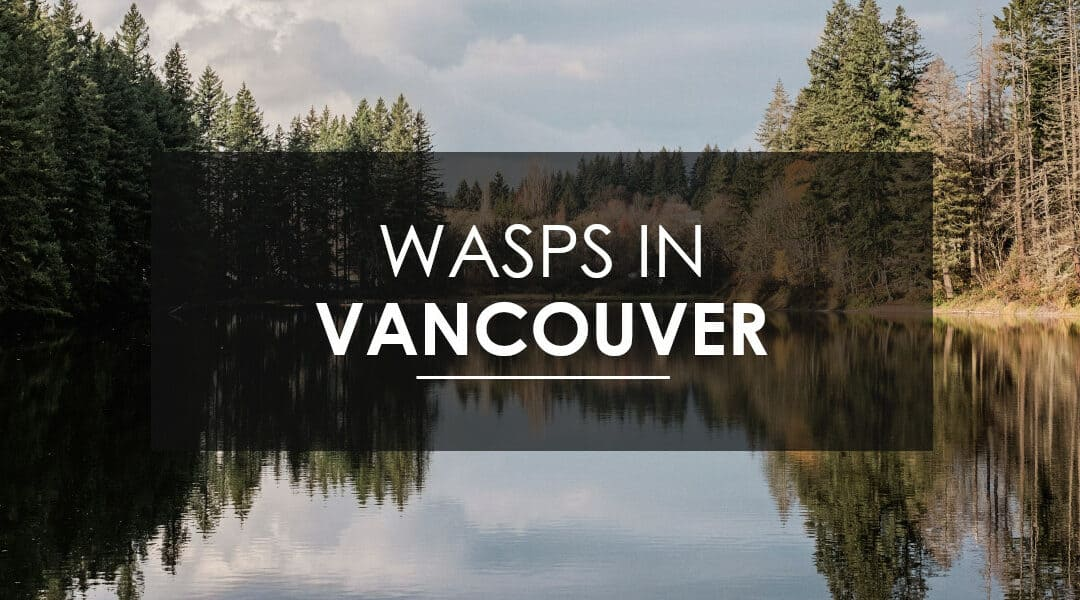 What to know about wasps,  hornets, and yellow jackets in Vancouver