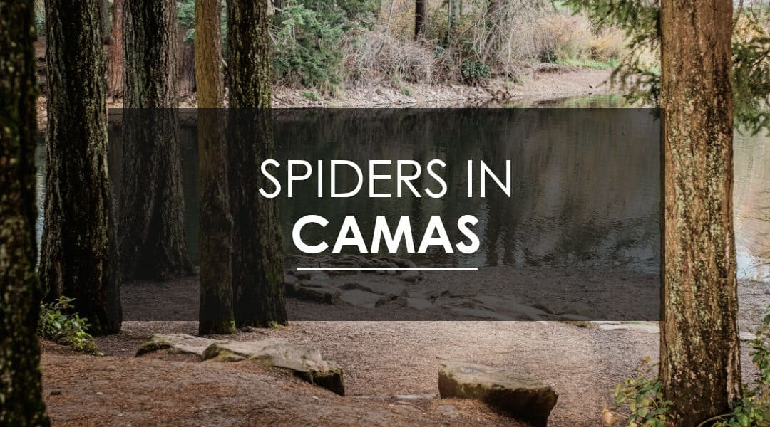 Spiders in Camas, WA
