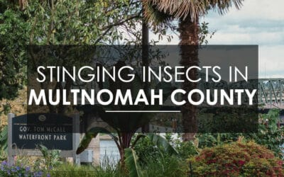 Wasps, Hornets, and Yellow Jackets in Multnomah County
