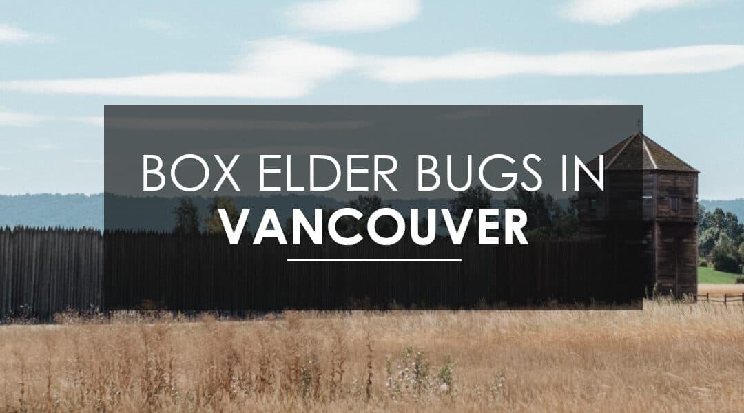 Boxelder Extermination In Vancouver, WA