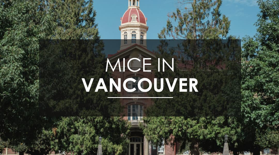 Mice in Vancouver