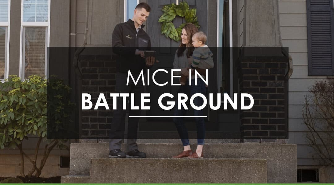 Battleground, WA Mice Infestation: How do I get rid of the mice I have,  and prevent them from coming back?