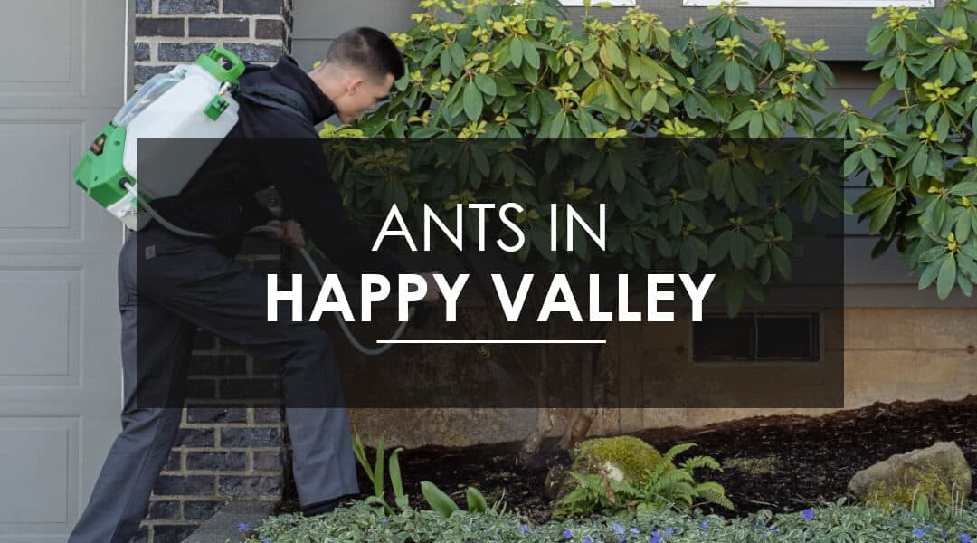 Ants in Happy Valley