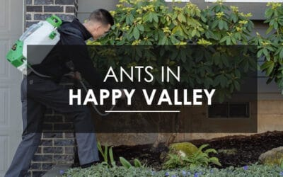 Sugar Ant Extermination  in Happy Valley