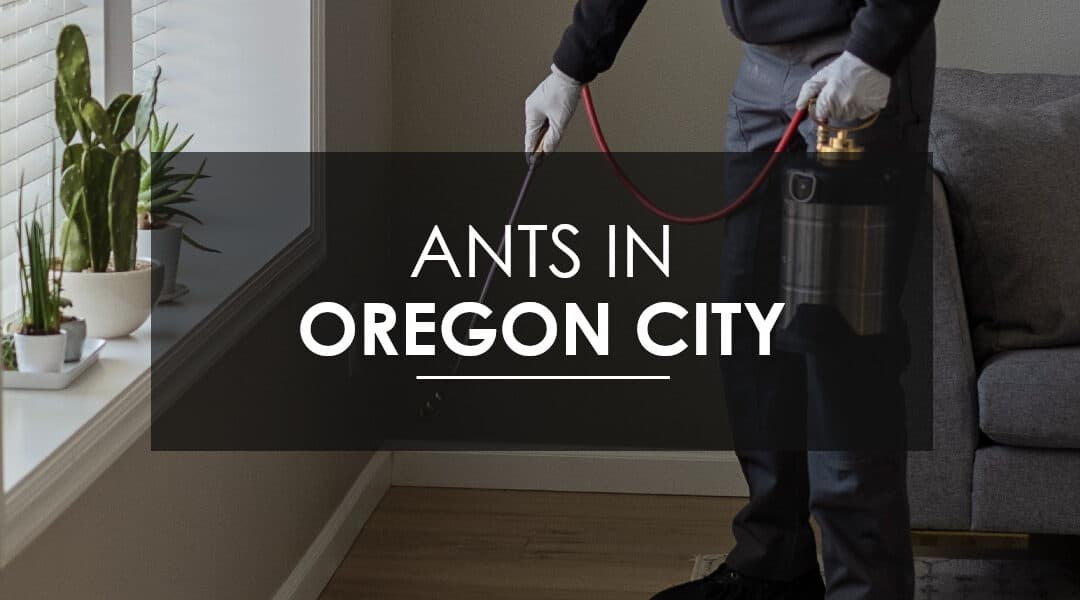 Ants in Oregon City