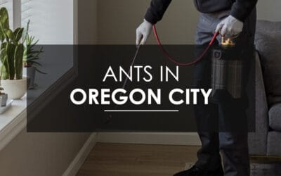 Oregon City Sugar Ant Extermination