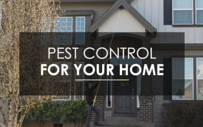 Why Should I Consider  Quarterly Pest Control Service? Why regular, preventative pest control matters to residents of Vancouver, Camas, and Ridgefield